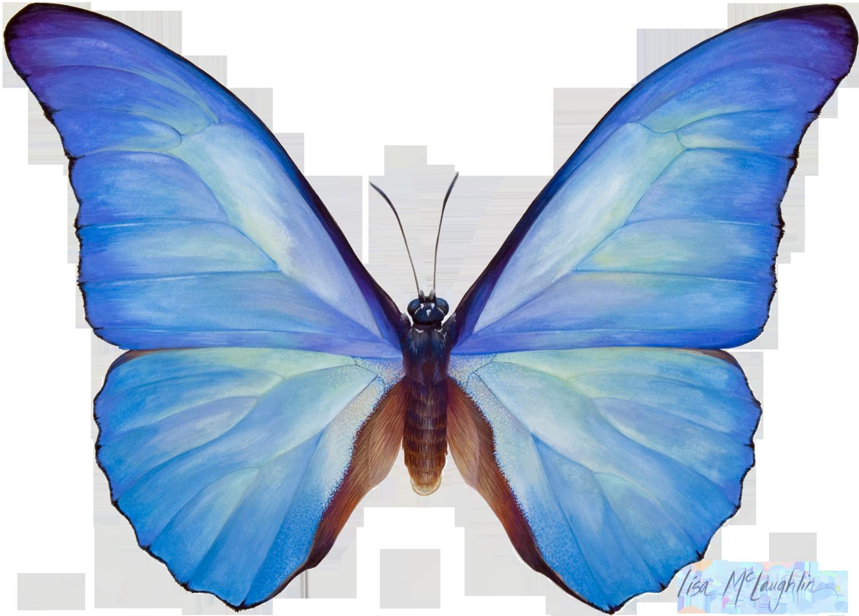 Lisa McLaughlins Detailed Wildlife Watercolors Exhibit
