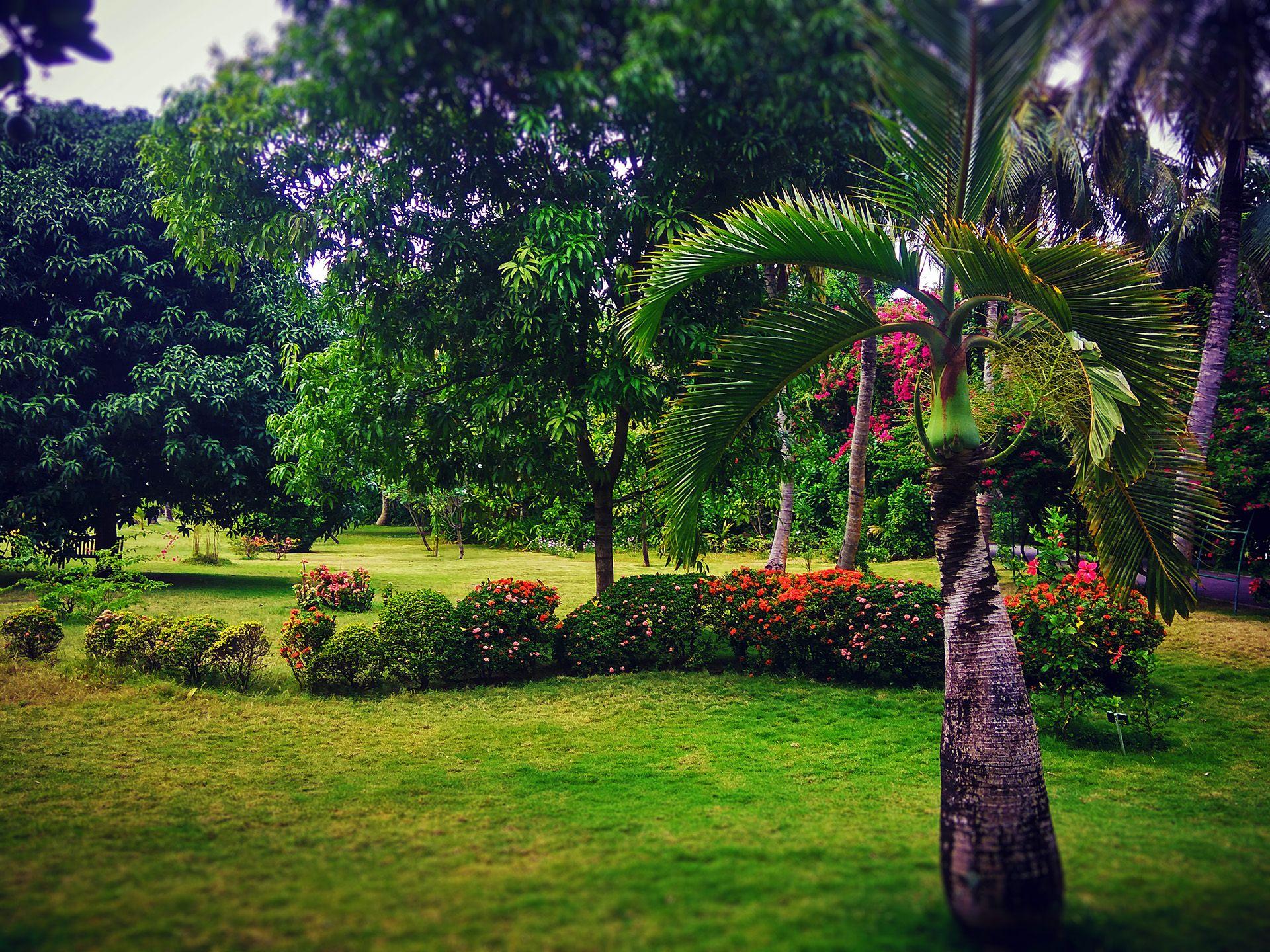 Sun Island Resort Spa A Flowering Jewel Among Maldives Family Hotels