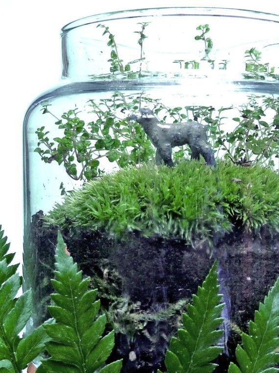 Moss Terrarium DIY Kit