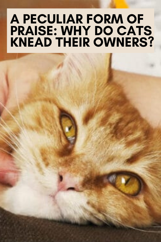 A Peculiar Form of Praise Why Do Cats Knead Their Owners