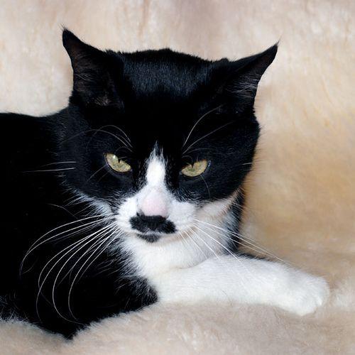 Black Cat White Fur White Cats Cats Black Cat