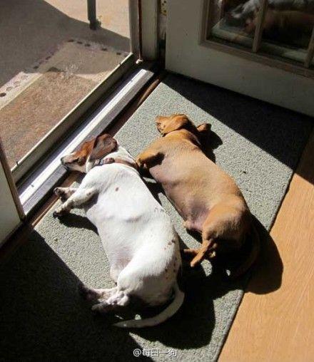 lazy & cozy afternoon. Enjoying sunshine!