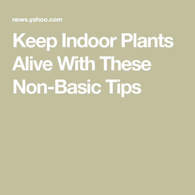 Keep Indoor Plants Alive With These Non Basic Tips With