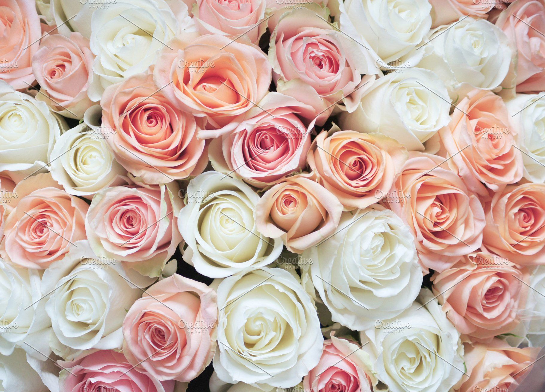 White And Pink Roses Background White And Pink Roses Pink Roses Background White Roses Background