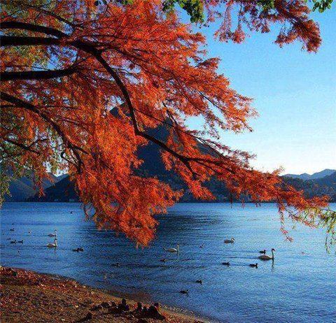 L'autunno è una seconda primavera, quando ogni foglia è un fiore. Albert Camus