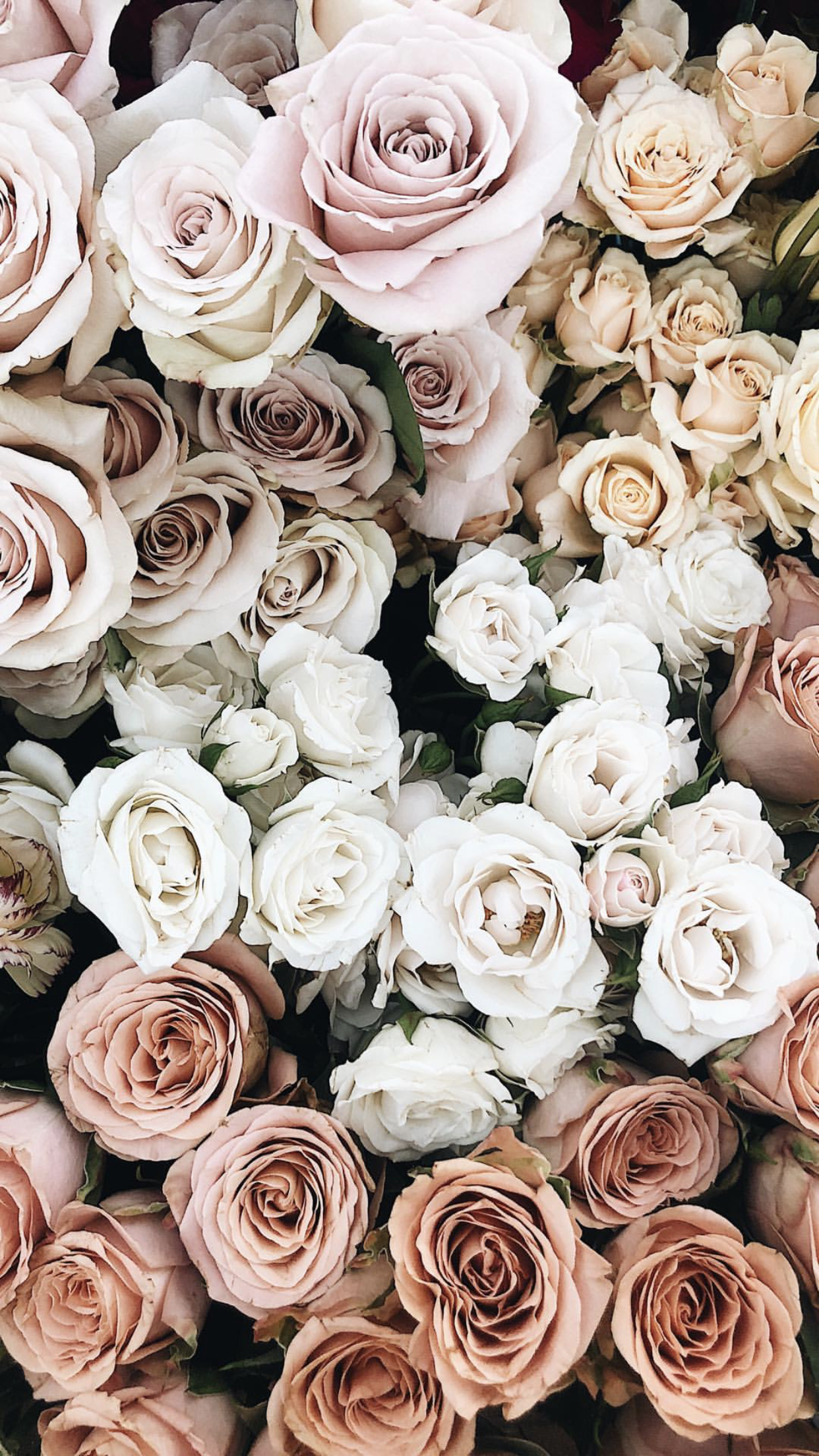 Hd wallpapers and background images Aesthetic White Rose Wallpaper Iphone - Download Free Mock-up