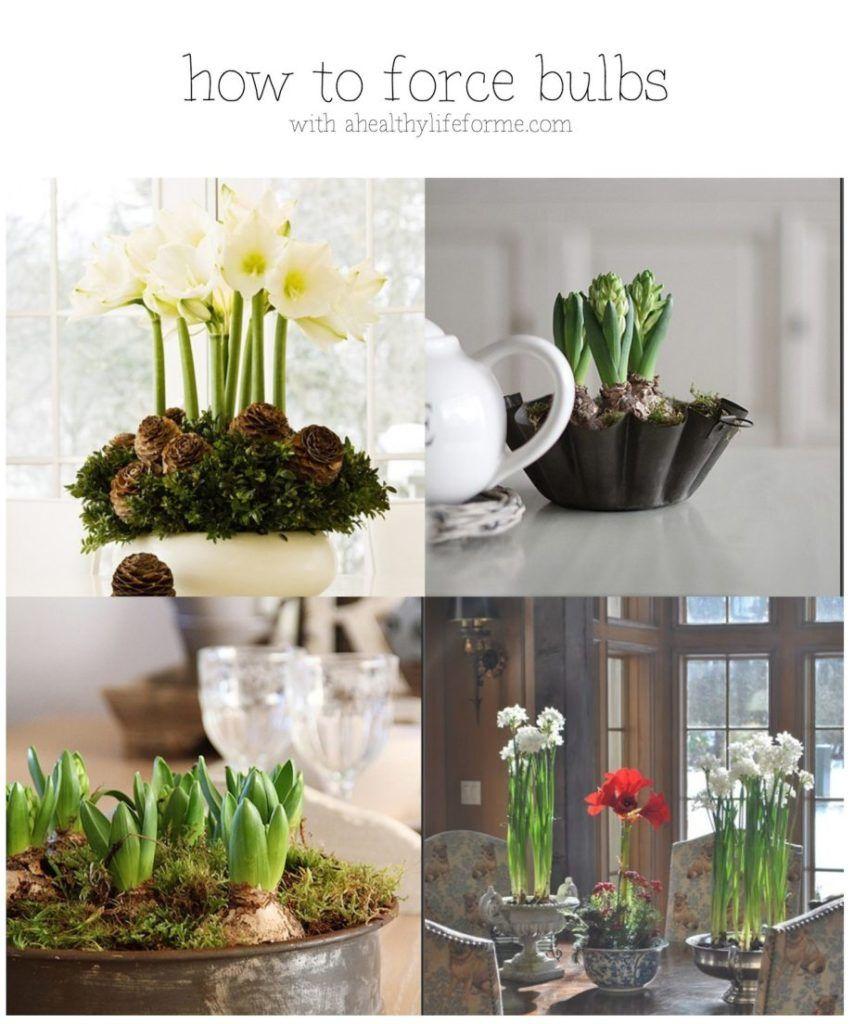 Fun Indoor Spring Garden Projects   Growing bulbs, Garden ...
