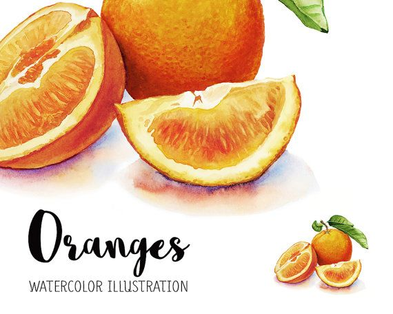 Oranges Watercolor Oranges Illustration Watercolor Fruit