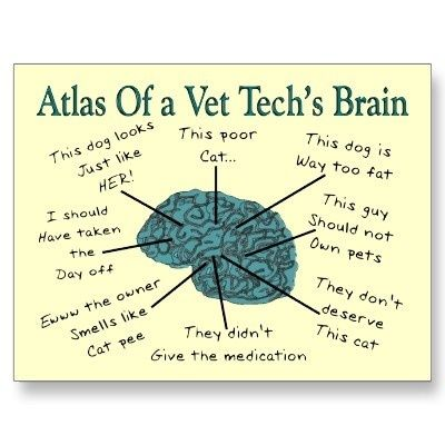 Funny Vet Tech Quotes  Animals    Vet Tech Quotes