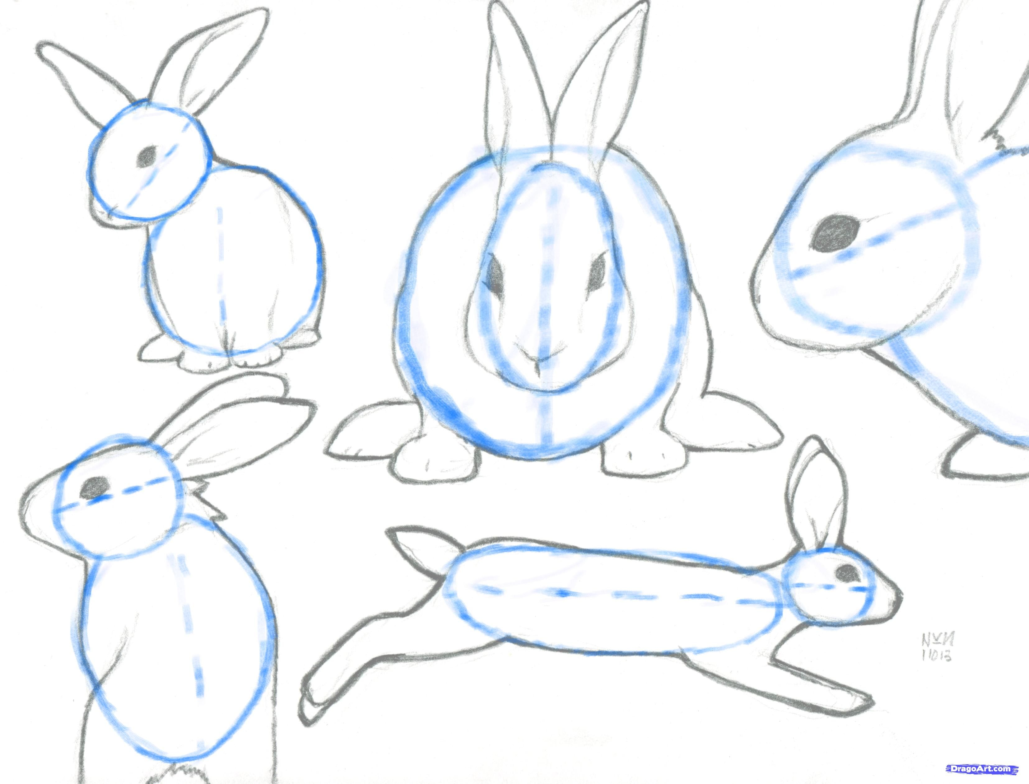 - Rabbit Drawing Step By Step - Google Search Rabbit Drawing