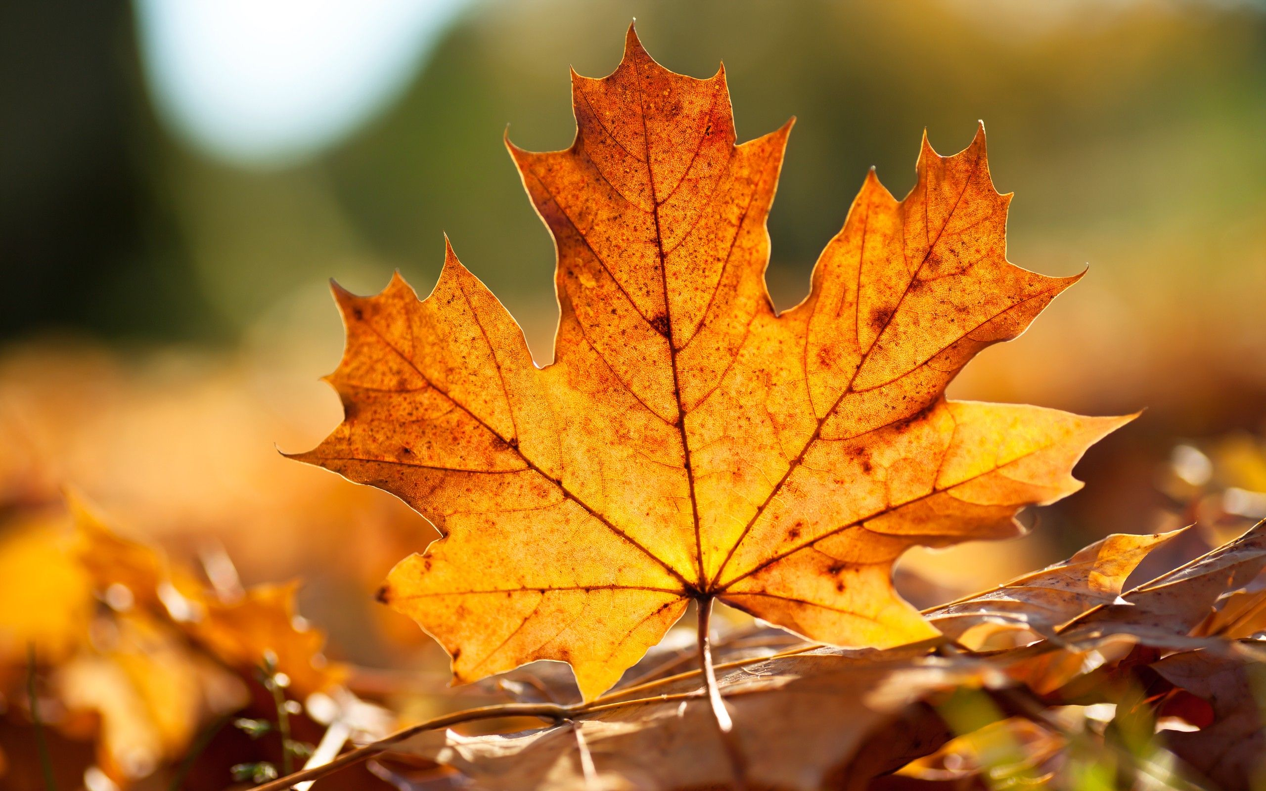 Autumn Leaves Carpet Wallpaper Autumn Nature Wallpapers in jpg