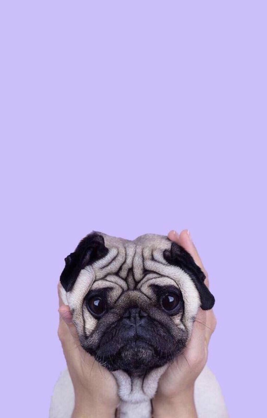 Pin by Hilal on Hilo in 2019 Dog wallpaper iphone, Cute