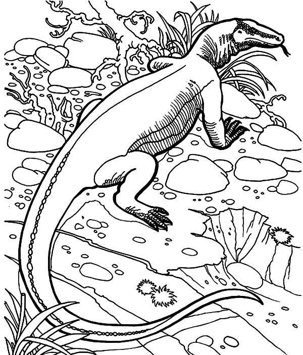 Komodo Dragon Komodo Dragon Hiding Behind Grass Coloring Pages