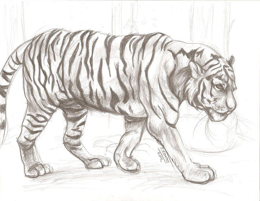 Sketching Animals Animal Drawing Tumblr Animal drawing 1