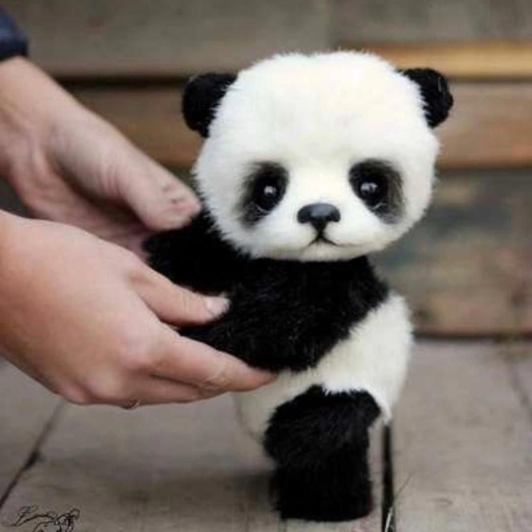 Cute Cartoon Animals With Big Eyes Pictures Cute Stuffed Animals Cute Funny Animals Cute Baby Animals