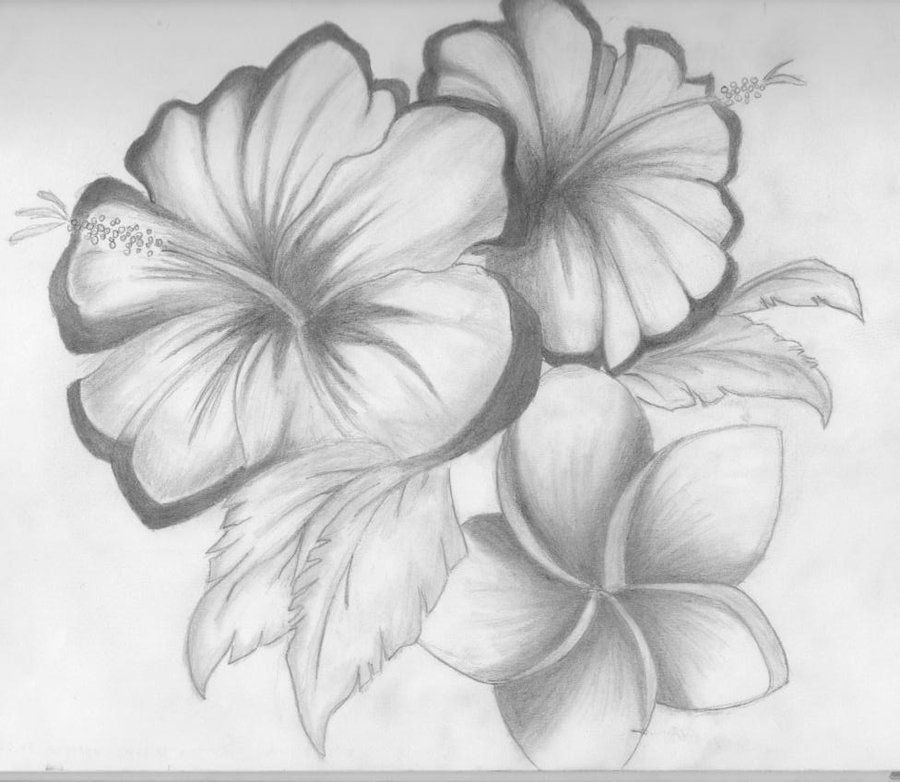 Pencil Sketches Of Hibiscus Flower