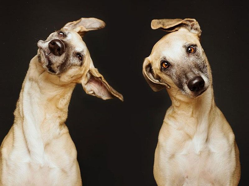 You've Never Seen Dog Portraits Like This Before!