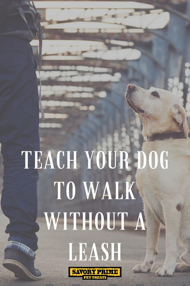Teach Your Dog To Walk Without A Leash Dog Training Dog Clicker