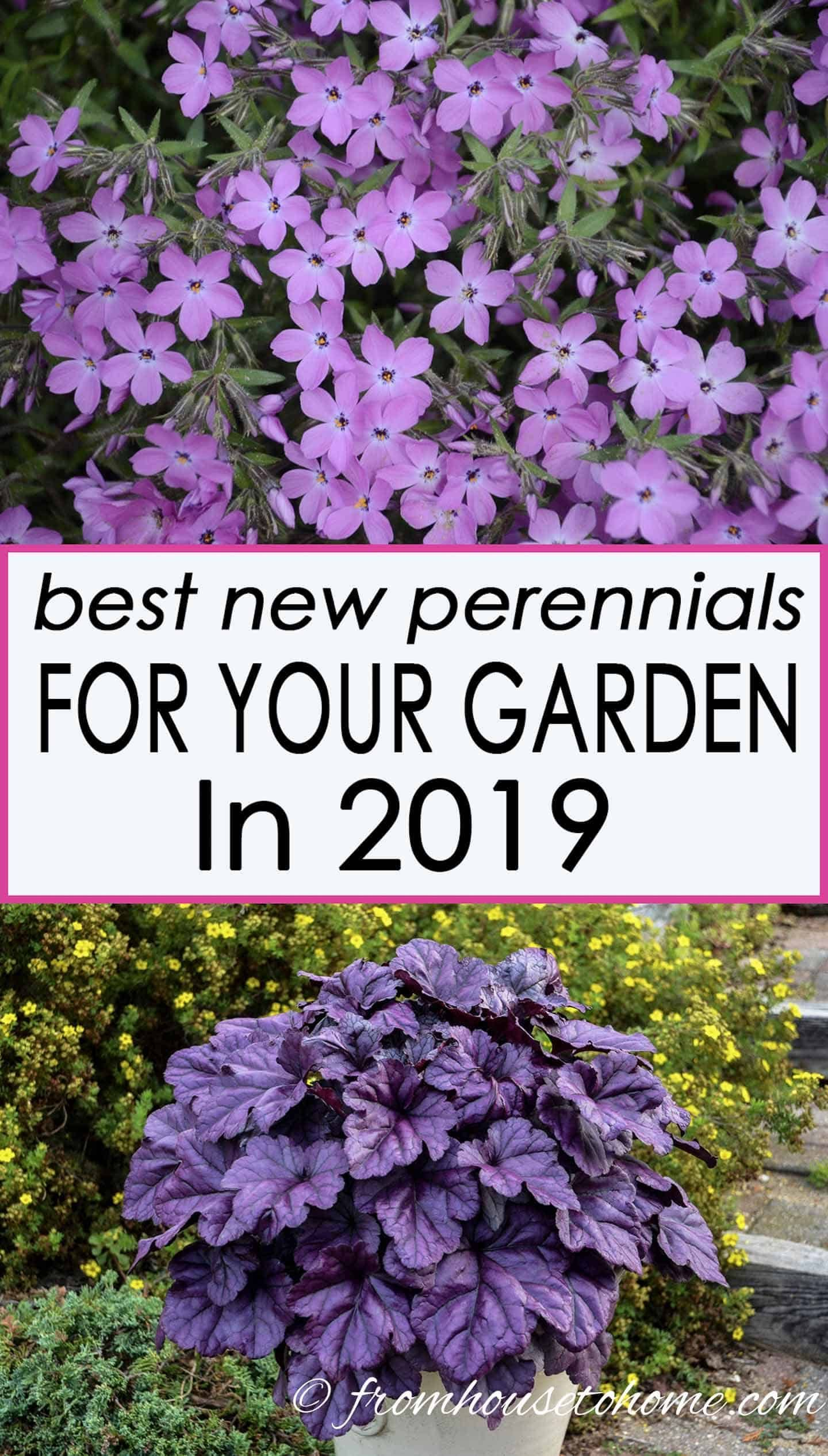 The best new perennials and shrubs for 2019 gardening - How to plant a flower garden for dummies ...