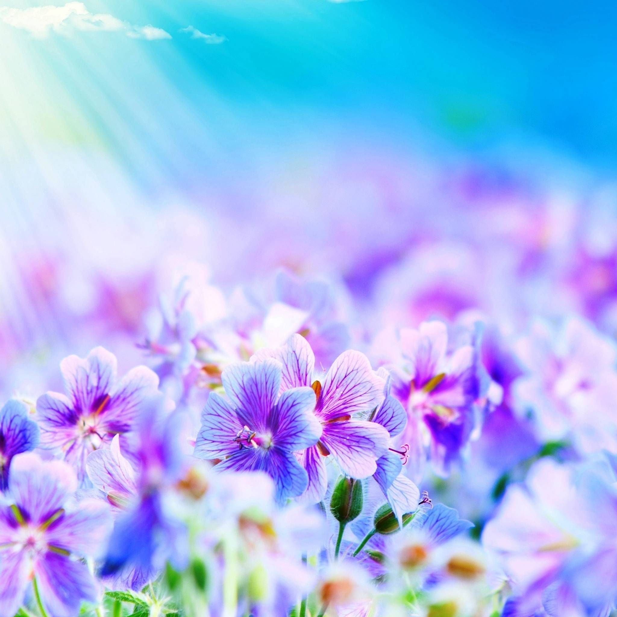 Purple Flowers iPad Air Wallpaper Download iPhone