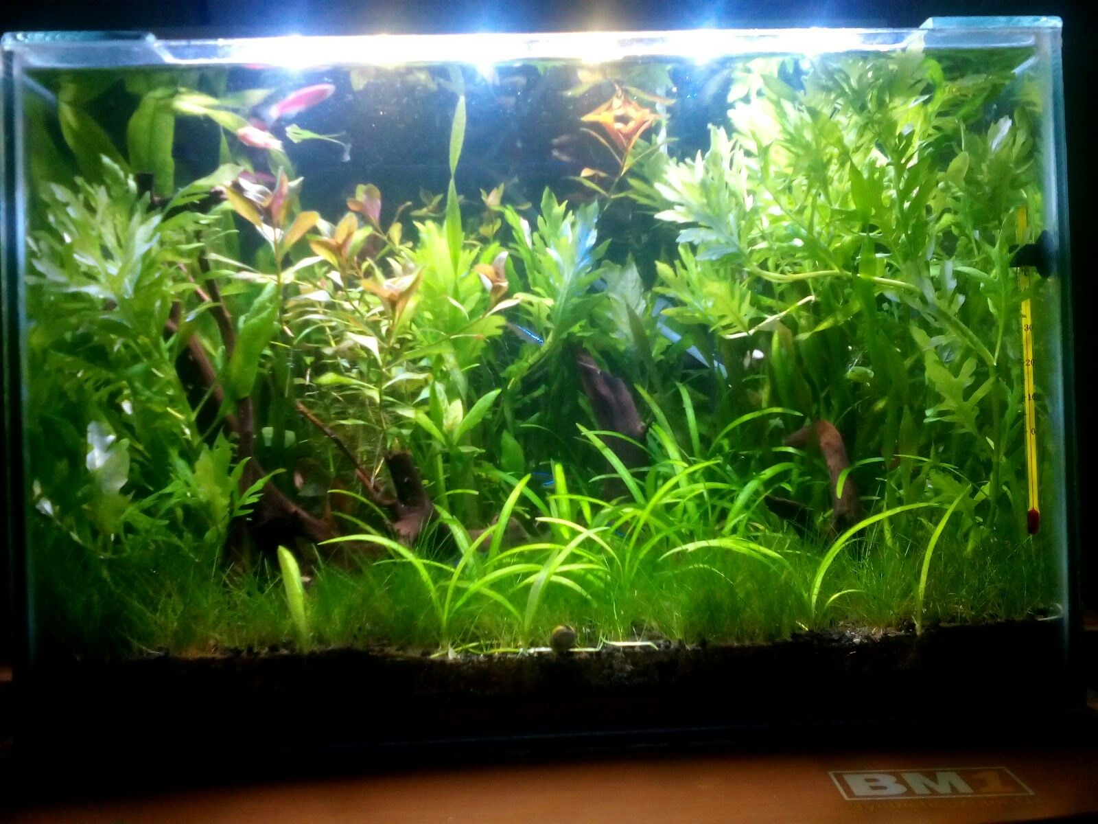 7month With Diy Dirt Substrate