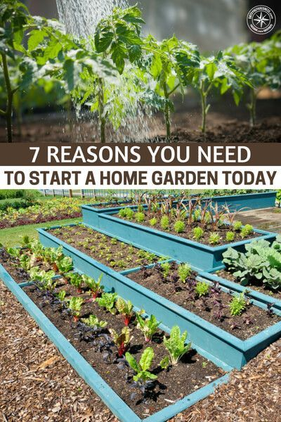 7 Reasons You Need to Start a Home Garden Today is part of Home garden Fun - How much more convincing do you need  For those of you reading this article and still wondering about a home garden, the time has come  You see, we are ushering ever closer to a time where self reliance and independence will play a bigger role in your life  The tariffs will have an affect on …