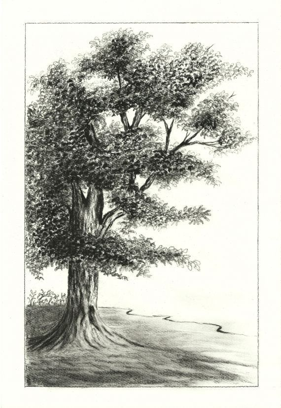 Oak Tree Charcoal Drawing Charcoal Drawing Tree Drawing Landscape Drawings