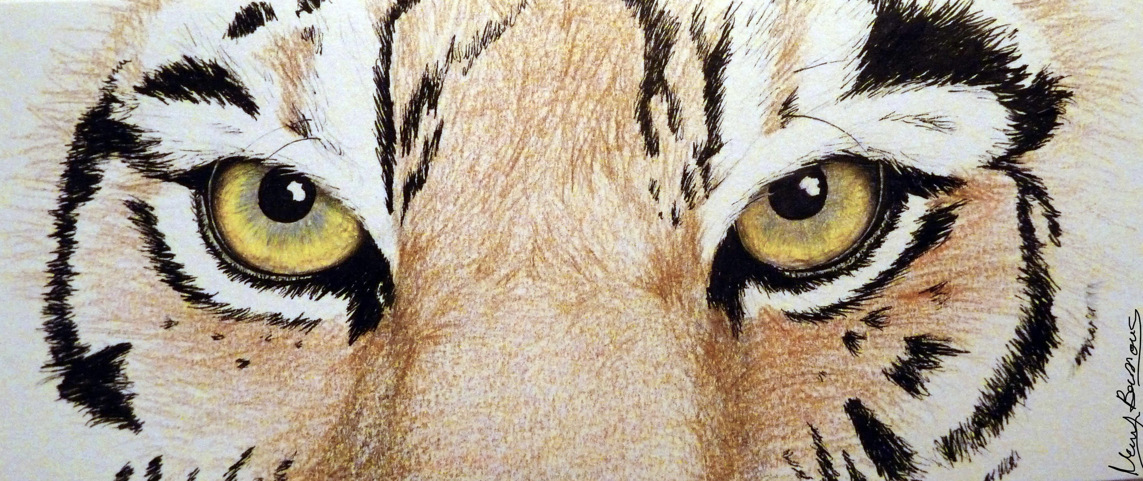 tigers drawings colored Google Search (With images