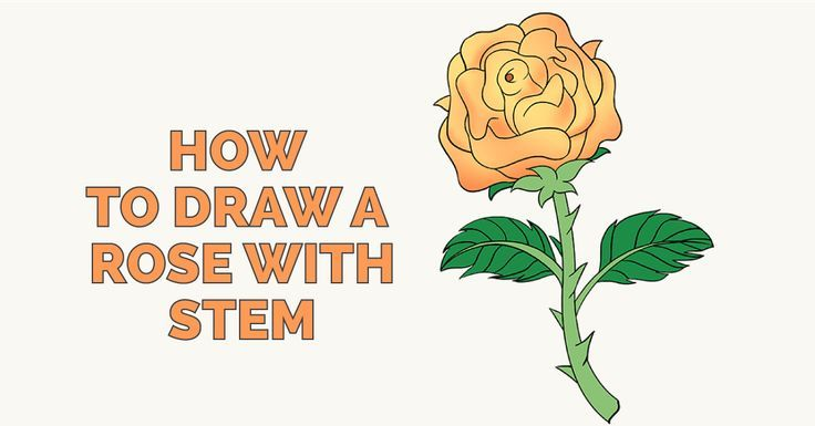 How to draw a rose in a few easy steps drawing guide easy how to draw a rose with stem easy and simple guide mightylinksfo
