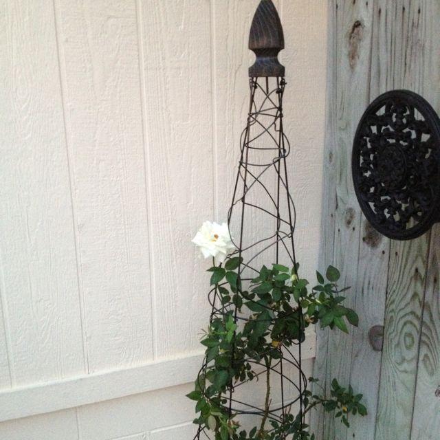 Diy Garden Obelisk 52 Inch Tomato Cage Turned Upside Down