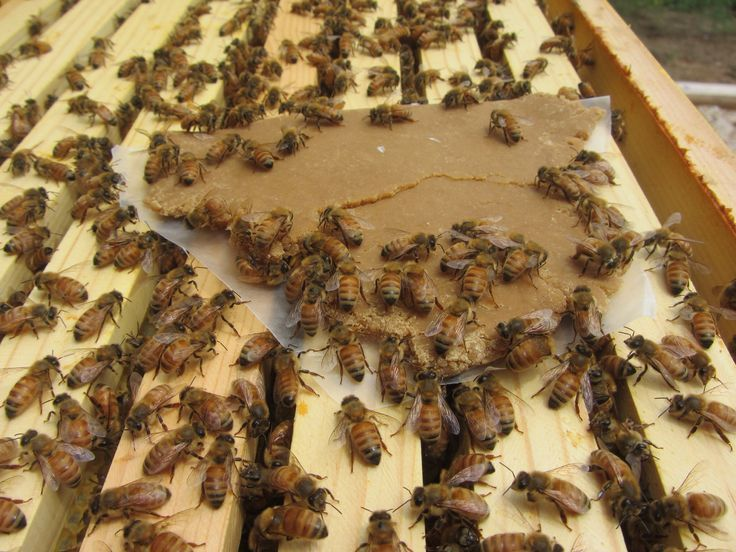 How to Make Pollen Patties for Bees