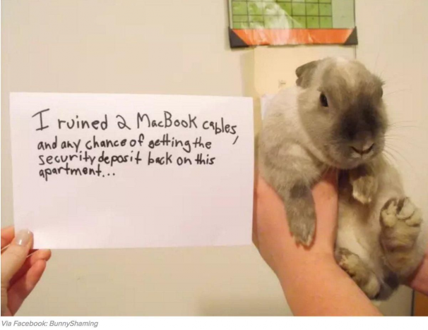 If you can forget about getting that security deposit back that would be greaaaaat. #rabbit #rabbits #rabbitlove #rabbitlife #bunny #bunnylove #bunnylovers #bunnyrabbit #bunnylife #pet #pets #cute #rabbithouses