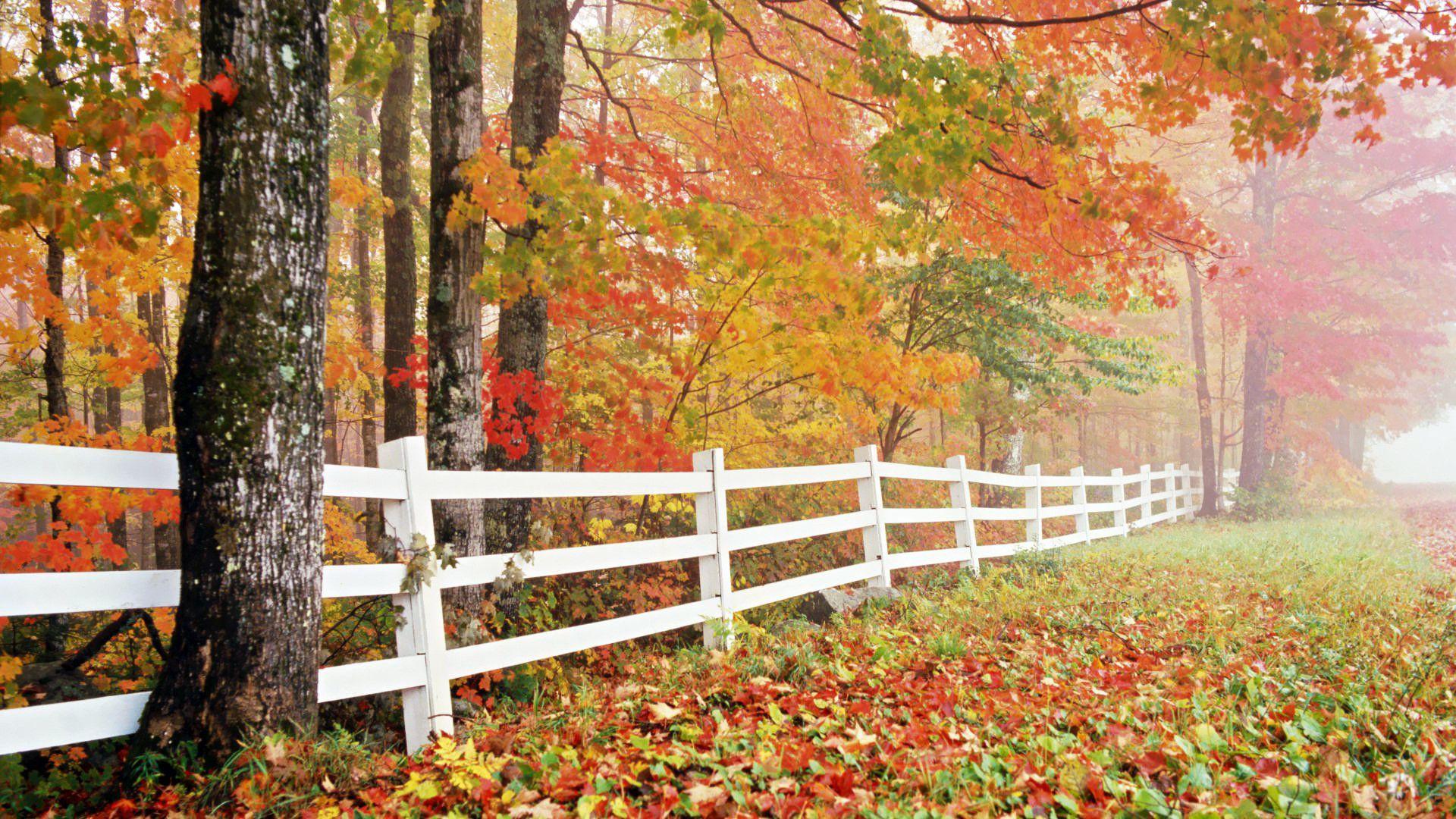 Nature Wallpaper Autumn Download Hd Computer Hd Wallpapers 1080p Download Full Hd Wallpaper New Nature Wallpaper Nature Wallpaper Watercolor Wallpaper Iphone