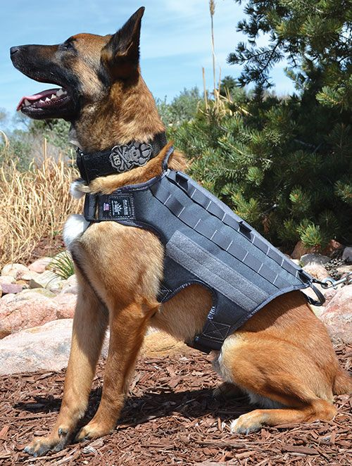 Ghost Series Ultimate Dog Harness Own This Vest Love It