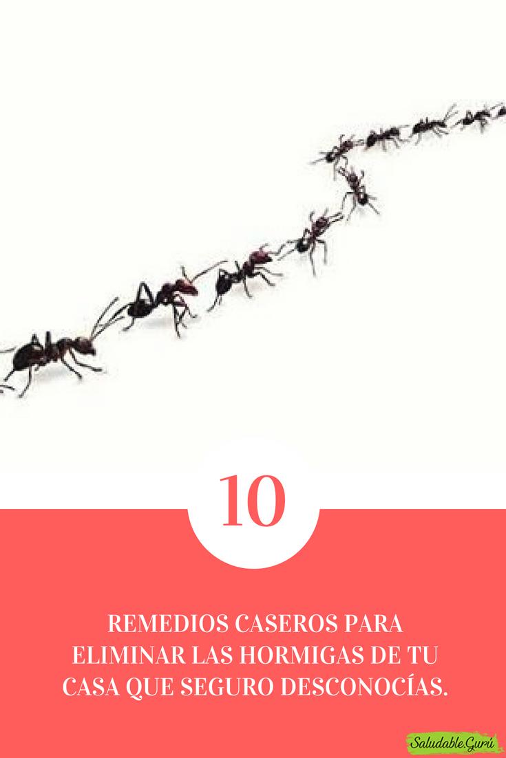 Como Acabar Con Las Hormigas 10 Remedios Caseros Para Eliminar Las Hormigas De Tu Casa Que