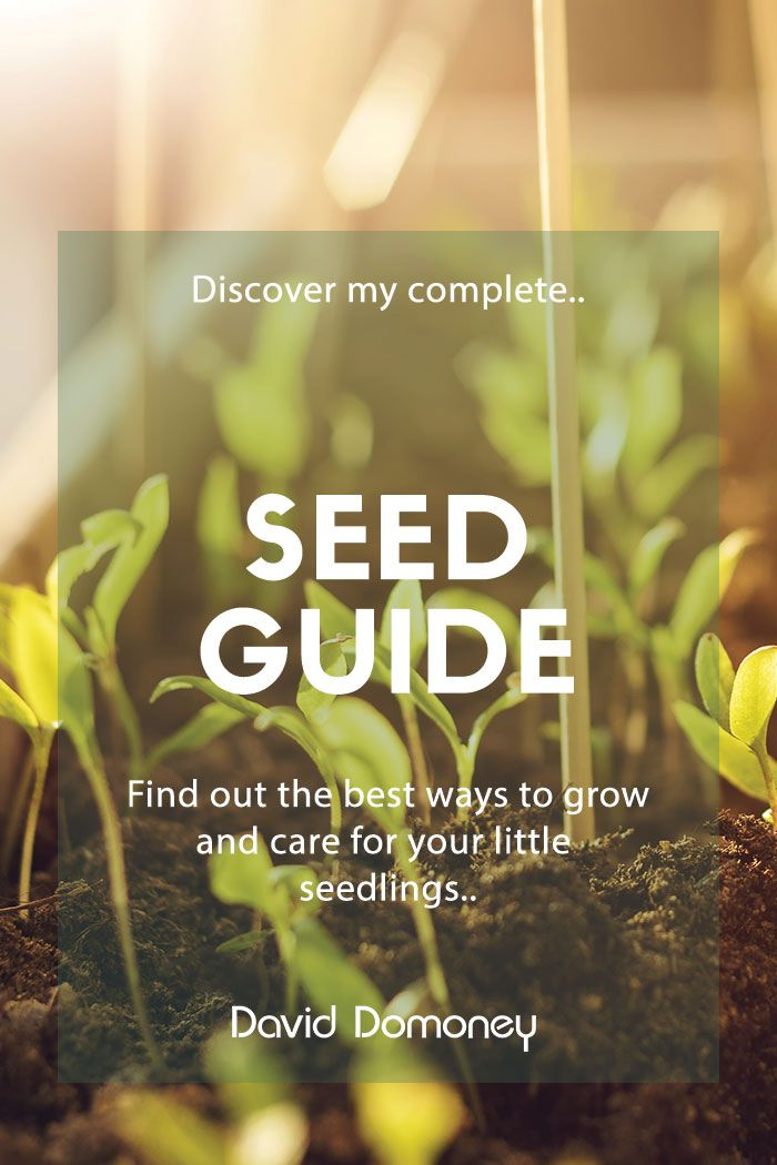 David Domoney's complete seed guide - David Domone