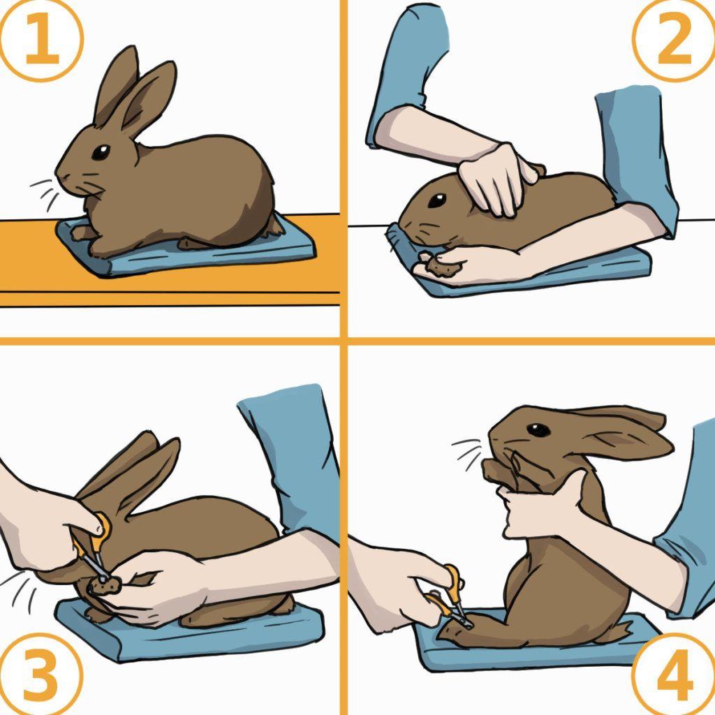 21+ 8 Rabbits ideas   pet bunny, bunny care, bunny Stock