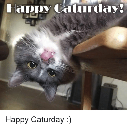 Pin By Lori On Saturday Caturday Mean Cat Cat Rescue