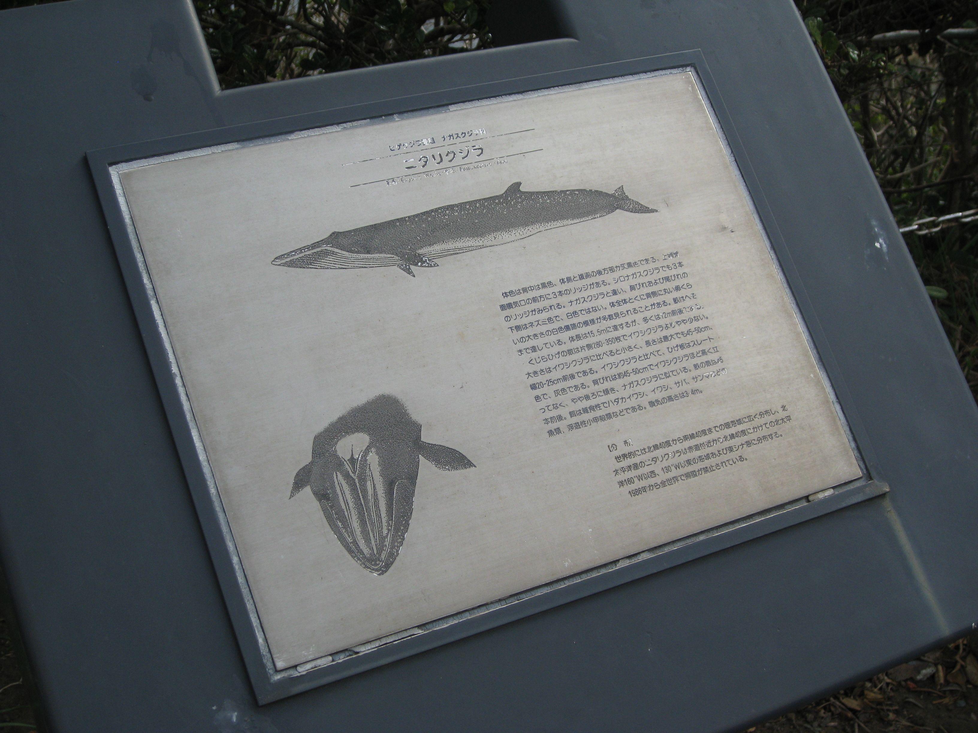 このように、様々な場所に、鯨の解説が書かれています。  散策しながら鯨博士になれるというわけです。