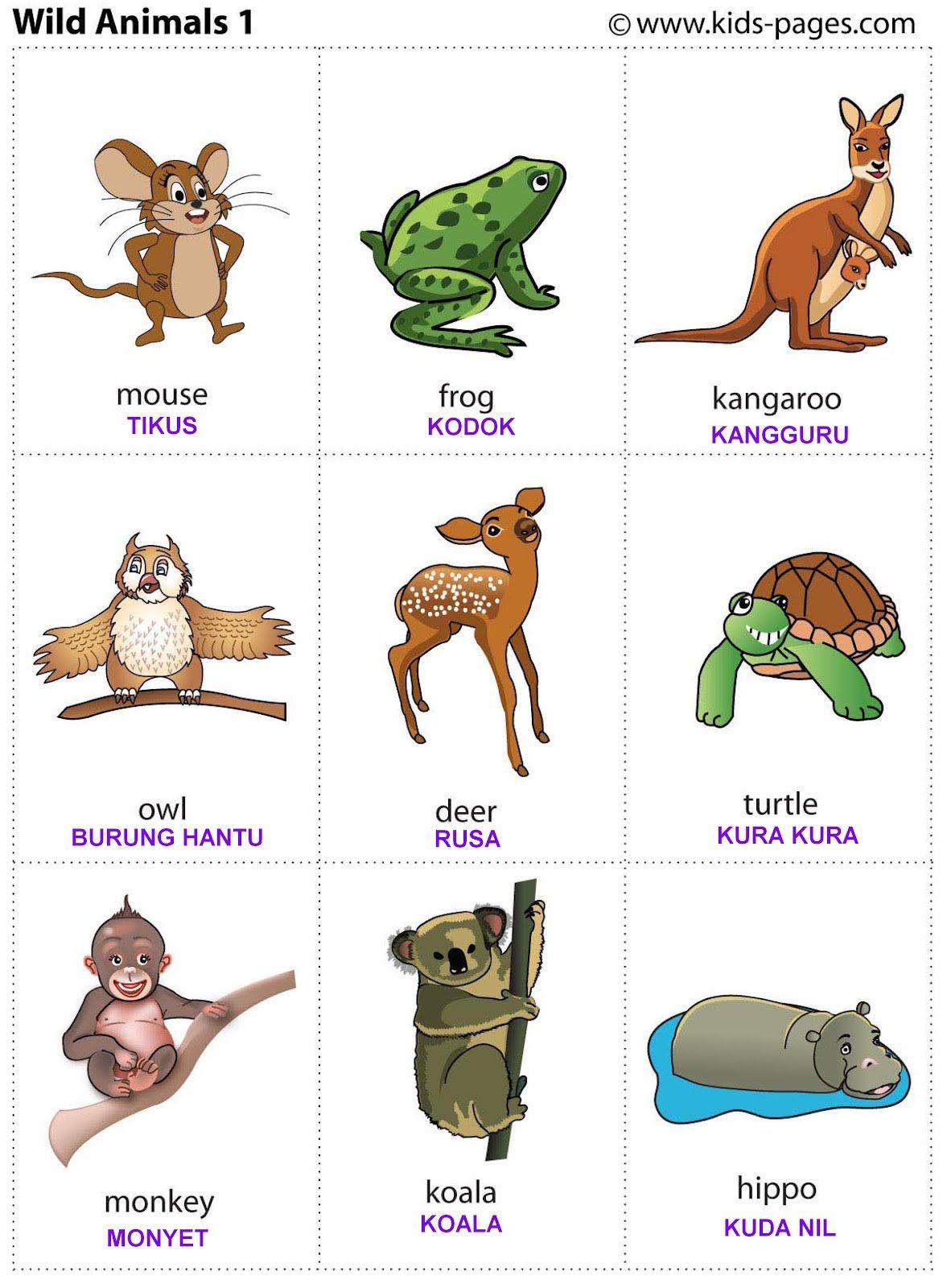 Animaux flash jeu de cartes-educational learning image /& mot fun card pack
