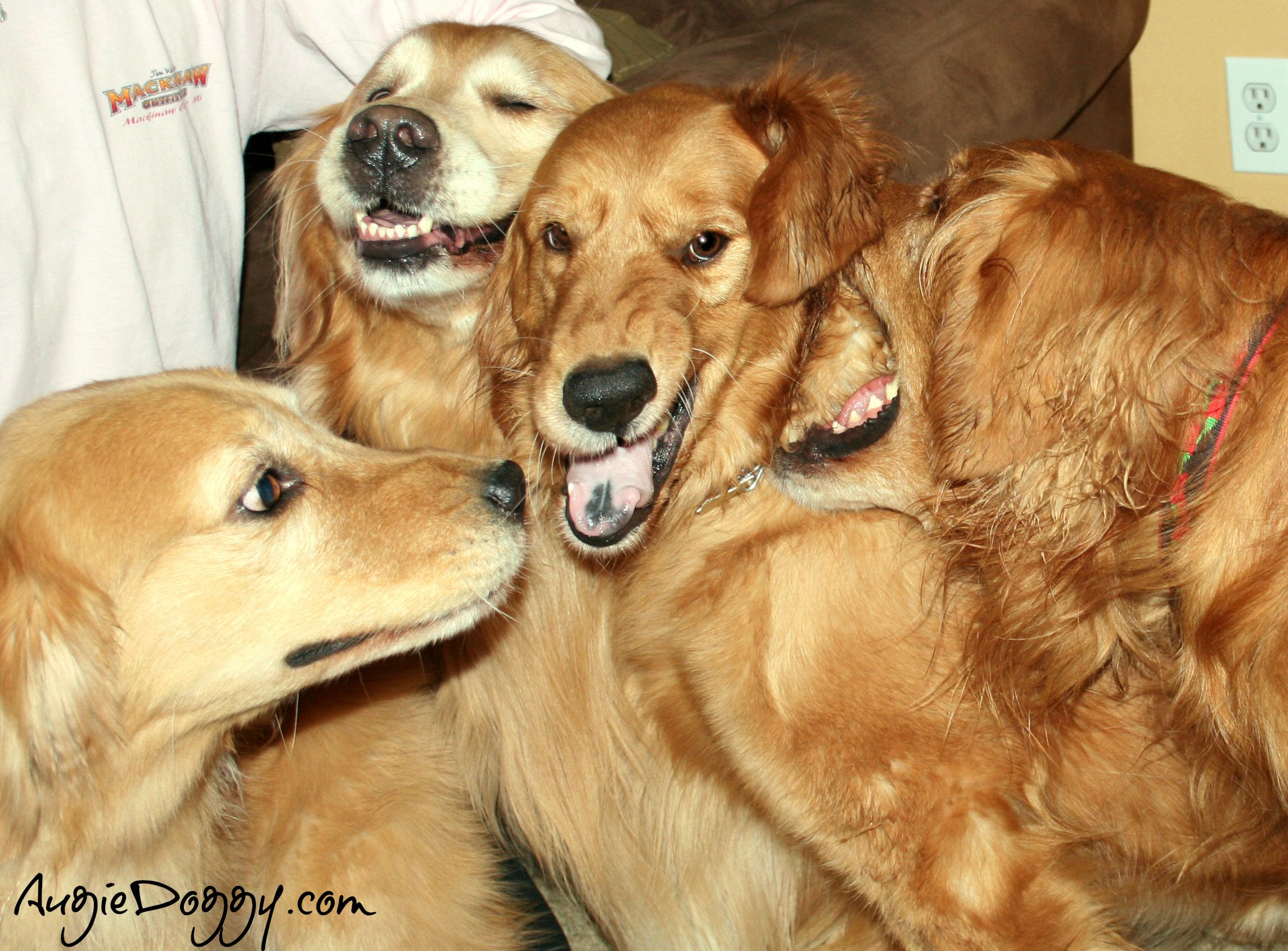 www.AugieDoggy.com -- Fun with friends!