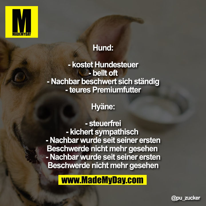 Hund: - kostet Hundesteuer