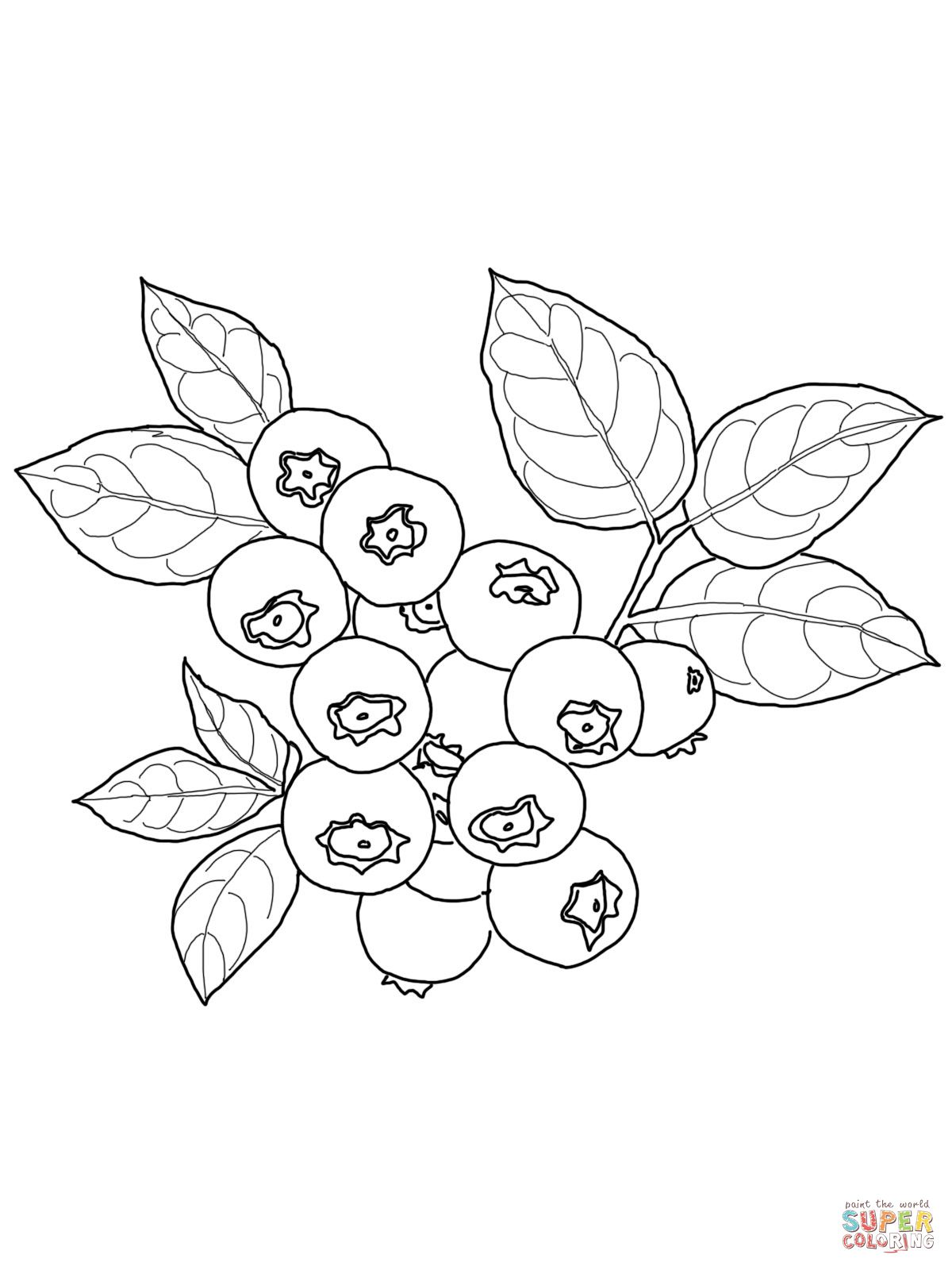 Blueberry Coloring Page Supercoloring Com Food Drink