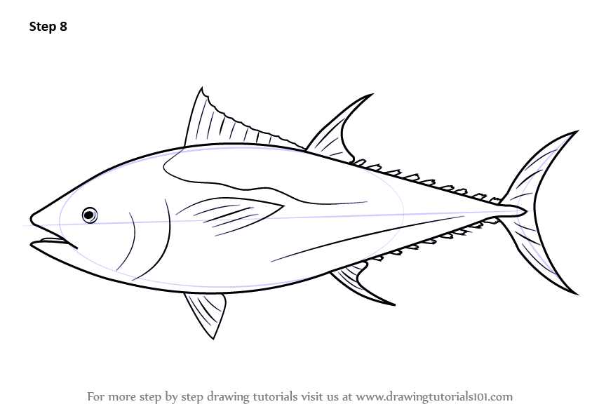 Learn How To Draw An Atlantic Bluefin Tuna Fishes Step By Step Drawing Tutorials Bluefin Tuna Fish Drawings Bluefin