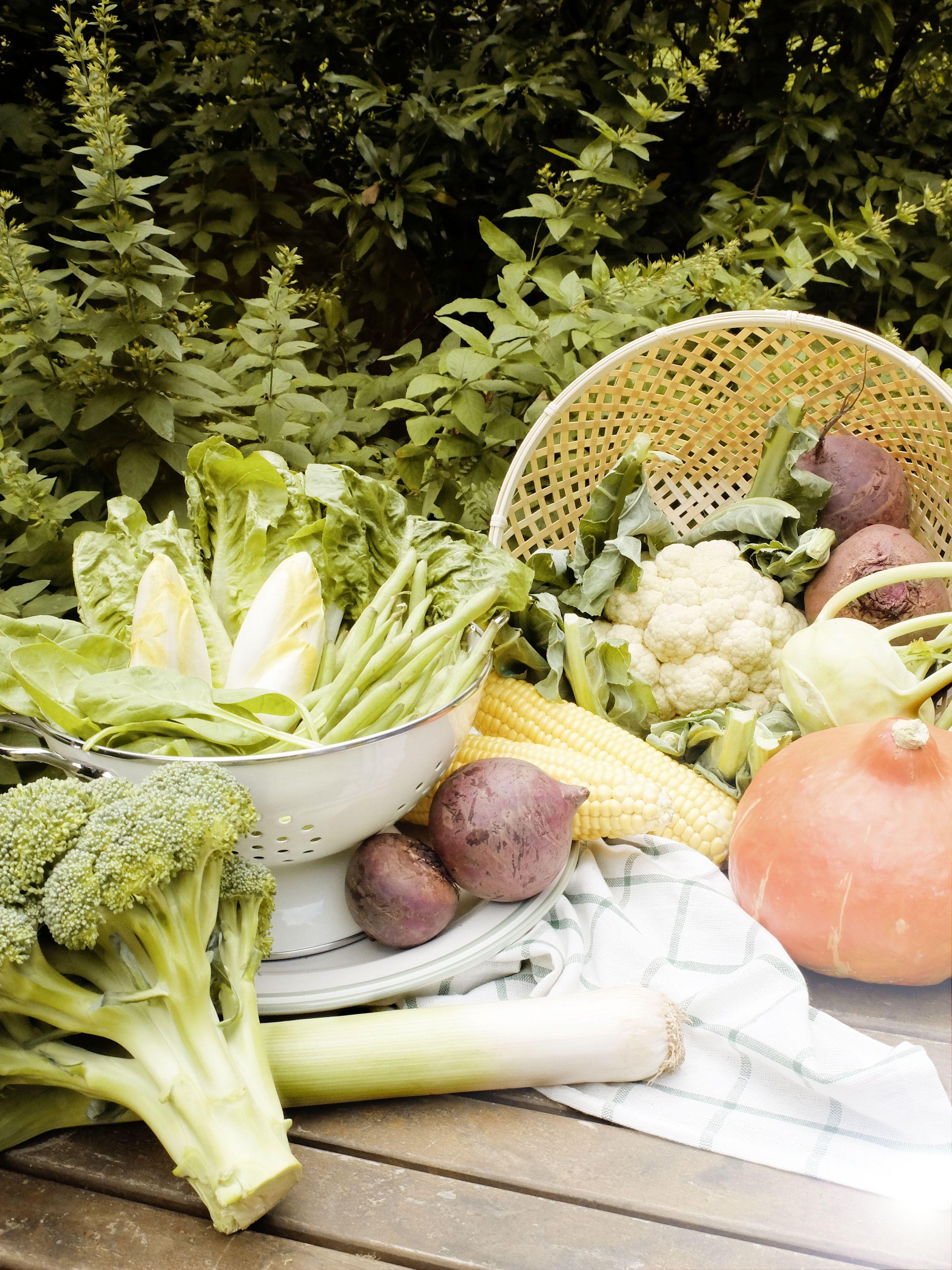 Deutschland Mein Garten Herbstliches Gemuse Autumn Vegetables Pumpkin Obst Und Gemuse Garten Und Obst