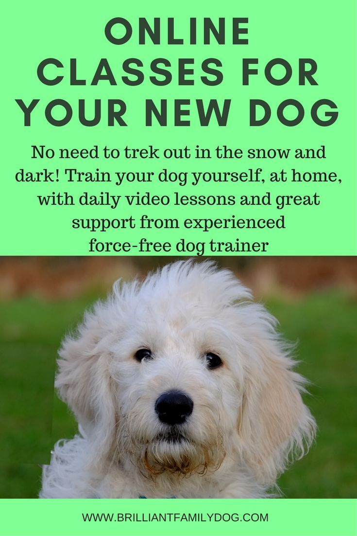 New Rescue Dog Your Dog Getting Naughtier Superb Online Dog