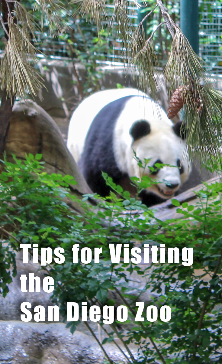 The Only Zoo Where A Two Day Pass Might Be Necessary San Diego Zoo San Diego Travel Zoo