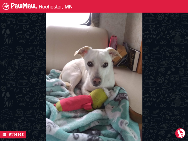 Murphy A Male Dog Lost In Rochester Mn In 2020 Losing A Pet Dogs Neuter