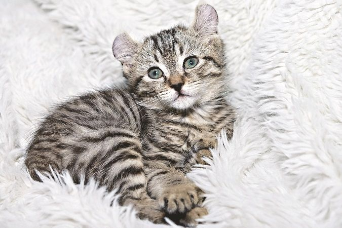 When Do Cats Stop Growing? Here's When Cats Reach Their