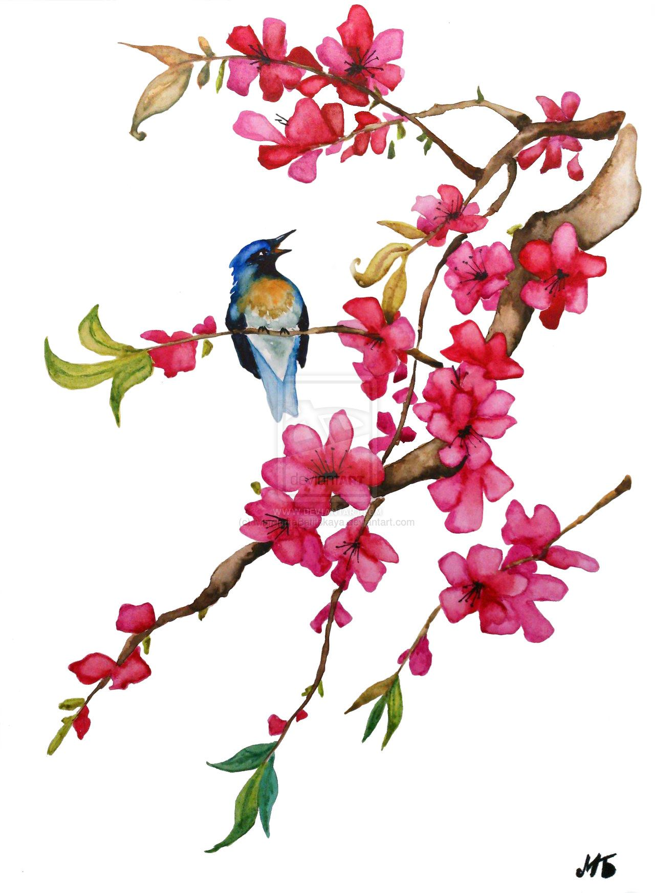 Chinese Watercolor A Flower Of Oriental Cherry By